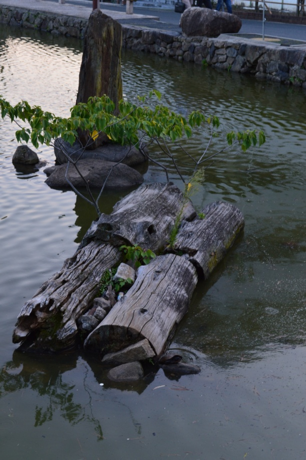 That pond was full of surprises. Here's a tree, in a tree, in a pond.