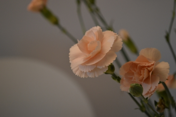 I just love carnations. So pretty :)