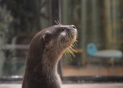 The otters practically never stood still but my husband still managed to get this great photo of one of them.