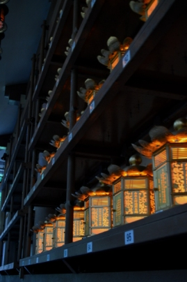 so many lanterns...