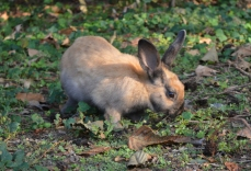 I had a bunny like this one when I was younger!